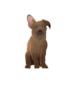Digital illustration of a small, scruffy dog sitting down. It has a short nose, and its left ear sticks straight up, while its right flops down.