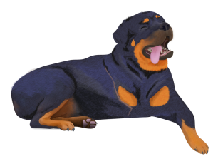 Detailed Illustration of a large rottweiler lying down, with head tilted back and eyes closed restfully as it tongue hangs out its mouth. The dog has no noticeable tail, and has a long scar across its right shoulder where its leg is missing.